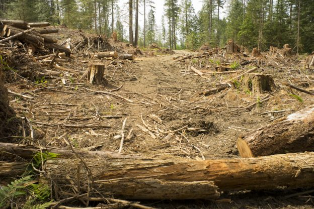 clear cut near Shawnigan Lake Vancouver Island BC Canada